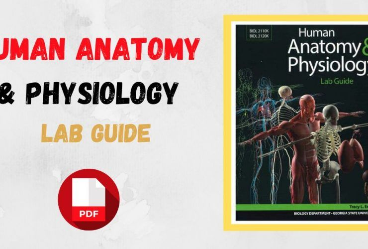 Human Anatomy & Physiology Lab Guide PDF